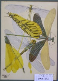 Three Framed A.E. Seguy Insects Chromolithographs