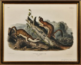 Audubon, John James (1785-1851) Bridled Weasel   and Little American Brown Weasel.   Plates LX and LXIV.