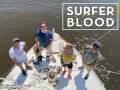 Surfer Blood * Winter * Carrier Waves