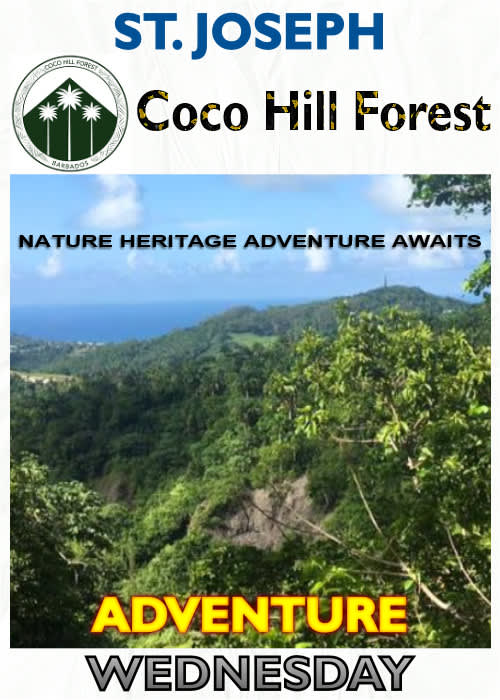 Coco Hill Forest