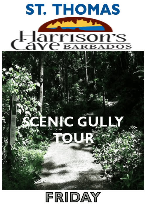Scenic Gully Tour