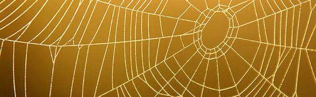 Emeralde's Web