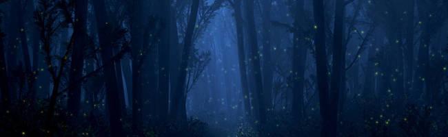Juniper Dreaming: Chrysalis