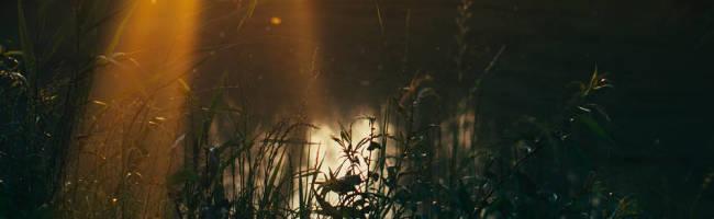 Dreamdwell: Nycthemeron Undone