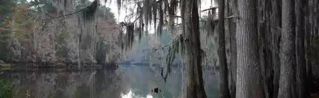 Bones of the Bayou