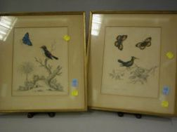 Pair of Framed Hand-colored Prints of the Crested Hummingbird with Butterflies and   the Black, White and Red Indian Creeper