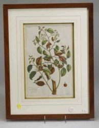 Four Framed French Tinted Botanical Bookplates