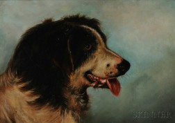 Anglo/American School, 19th/20th Century      Portrait Head of a Collie