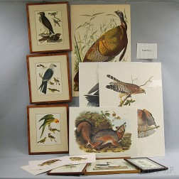 Group of Reproduction Audubon and Other Bird Prints