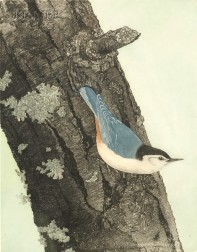 Maurice R. Bebb (American, 20th Century)      White-breasted Nuthatch