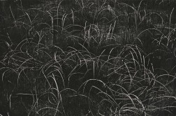 Harry Callahan (American, 1912-1999)      Grasses, Wisconsin