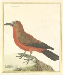 Group of Ten Framed Hand-tinted French Ornithological Bookplates