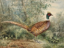Alexander Pope, Jr. (American, 1849-1924)      Three Images of Game Birds: Ringneck Pheasant, Silver Pheasant