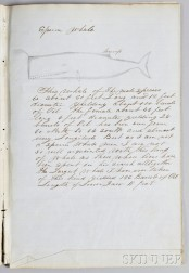 "Handwritten and Hand-drawn ""Descriptions of Whales by Capt. Thos. W. Roys Ship 'Sheffield' 1854,"""