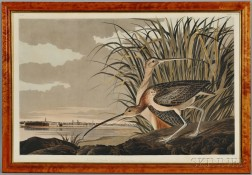 Audubon, John James (1785-1851) Long Billed Curlew.   Plate CCXXXI.