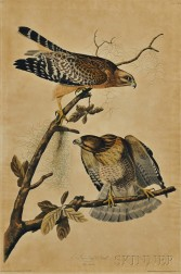 Audubon, John James (1785-1851) Red-shouldered Hawk,   Plate 9.