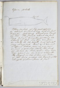 """Handwritten and Hand-drawn """"Descriptions of Whales by Capt. Thos. W. Roys Ship 'Sheffield' 1854,"""""""