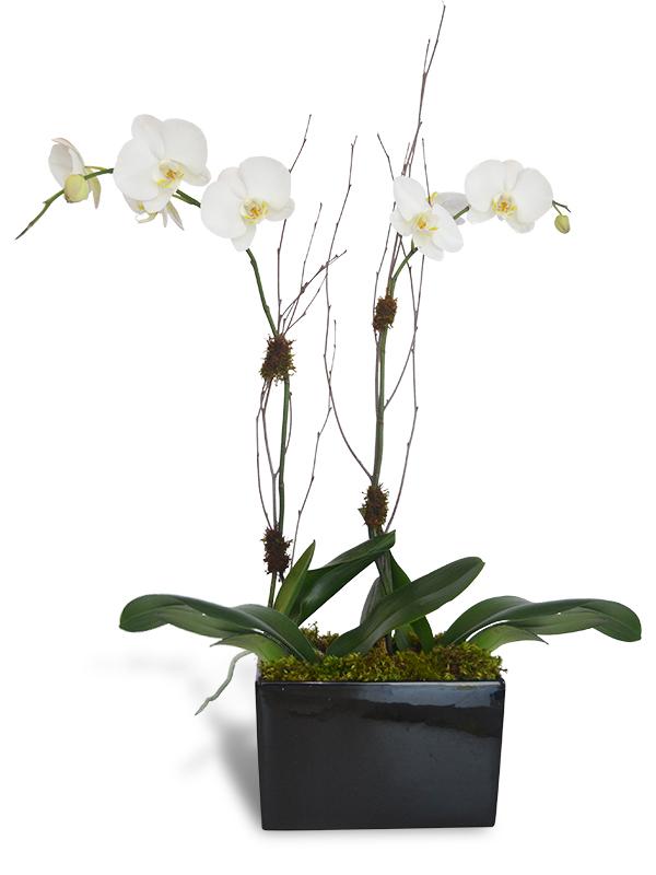 Alabaster Orchids Jupiter Fl Florist