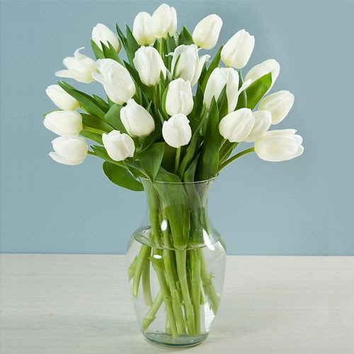 Image result for white tulip