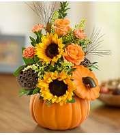 Pumpkin n