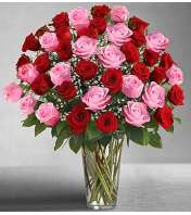 Four Dozen Pink & Red Roses