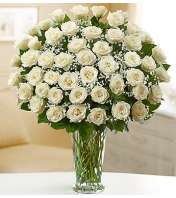 Four Dozen White Roses