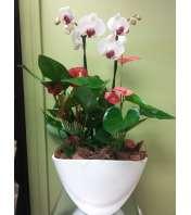 Large Orchid / Anthurium Planter
