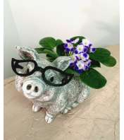 Piggy Planter with African Violet