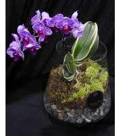 Pink Orchid Terrarium