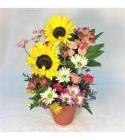 Sunflower Smiles