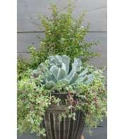 Premium Succulent Garden