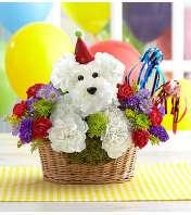 Puppy Celebration