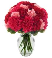 Very Berry Carnations