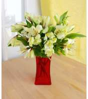 Dreaming of Alstroemeria (Red)