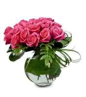 Modern Roses JF