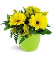Morning Sunbeam Daisy Vase™