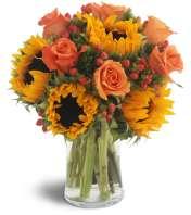 Sweet Harvest Sunflowers™