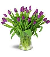 Royal Tulips™