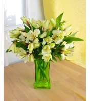 Dreaming of Alstroemeria (Green)