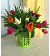 Assorted Tulips in Lime Green Lantern