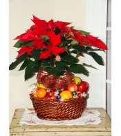 Fruit & Planter Christmas Basket