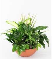 Lush Green Planter by DiBiaso