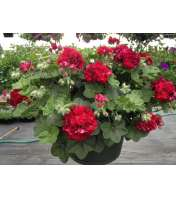Patio Baskets