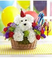 HAPPY BIRTHDAY DOG LOVER