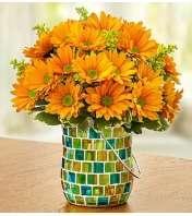 Golden Sunset™ in a Blue Mosaic Jar