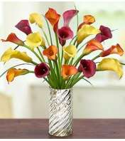 Autumn Elegance Calla Lilies