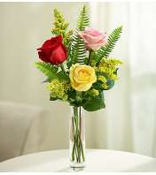 Love's Embrace™ Roses - Assorted