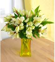 Dreaming of Alstroemeria (Yellow)