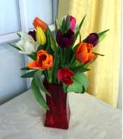 Tulips in Red Square Vase