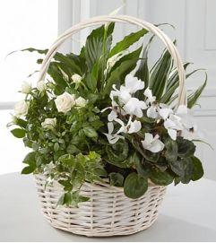 Green Planter